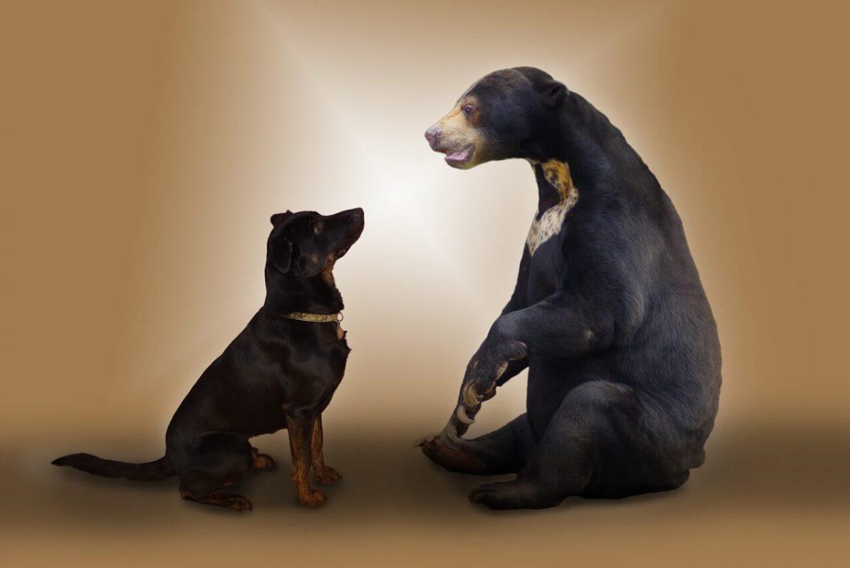 Do bears eat dogs