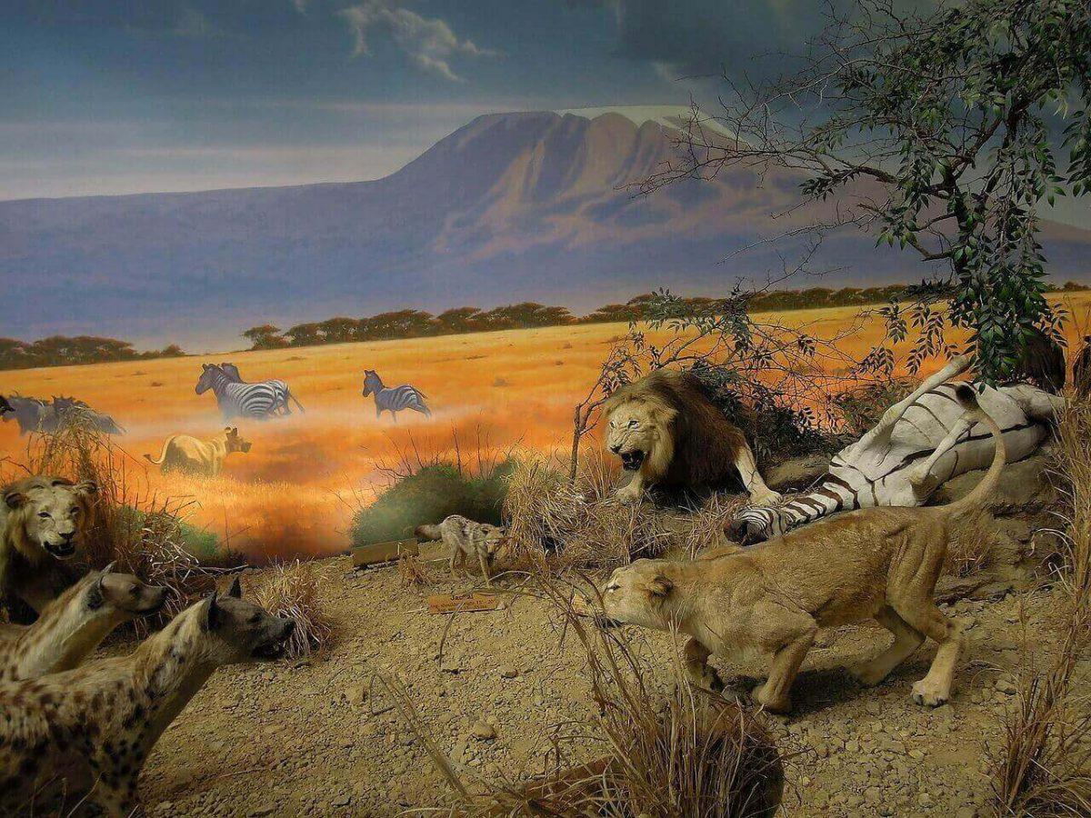 Do hyenas eat lions