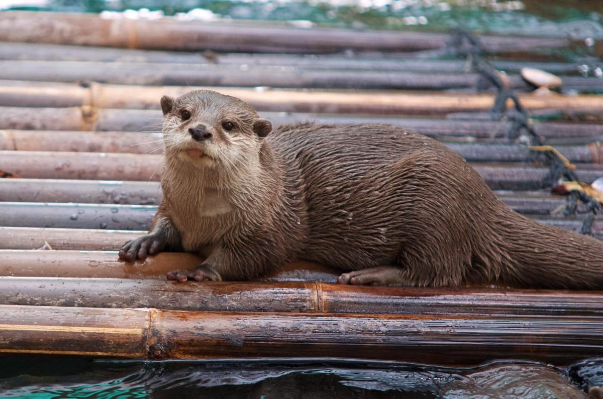 are otters friendly