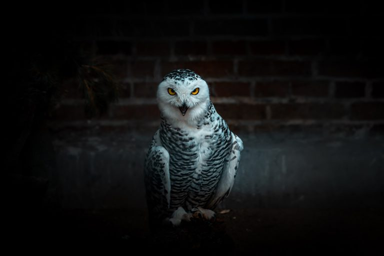 Do Owls Have Knees? [Solved & Explained]