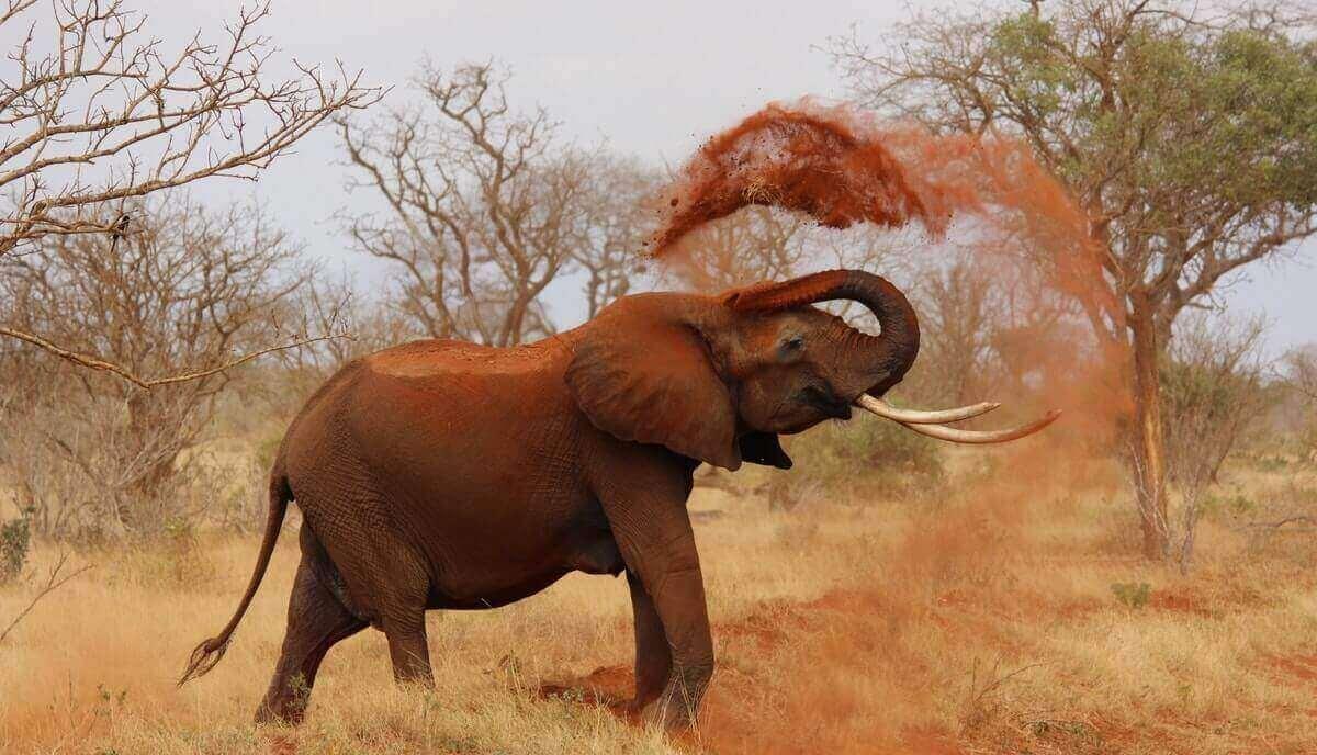 Are elephants predators