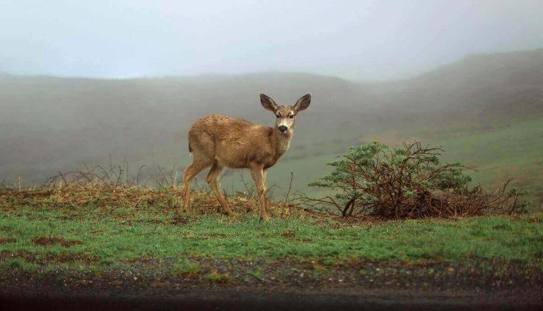 Do Deer Eat Mice?