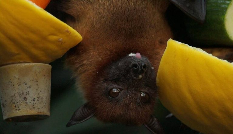 Are Bats Smart? All You Need To Know About Bats Intelligence