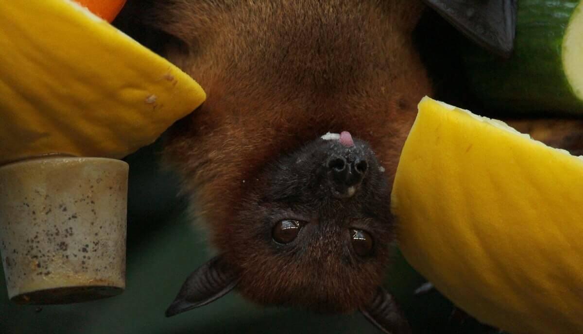 are bats smart