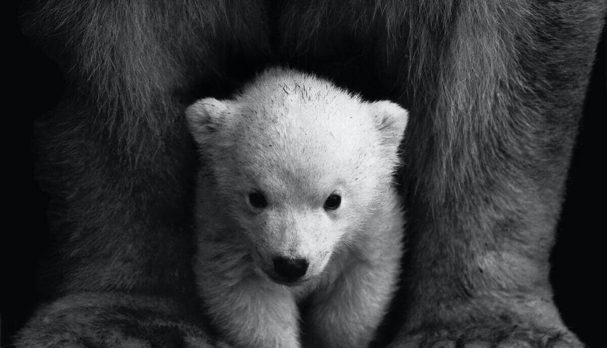 why are bears so cute