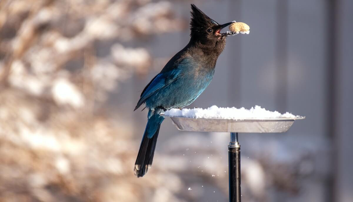 do birds eat maggots
