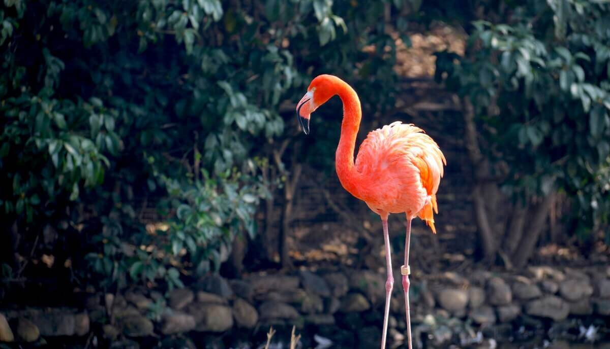can you own a flamingo