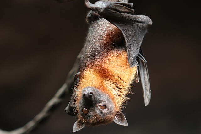 do bats have memory