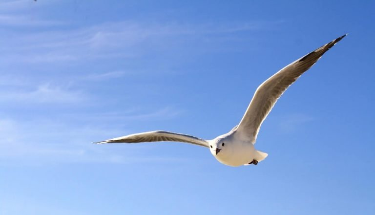 Do Seagulls Have Ears and 9 Other Fun Facts!