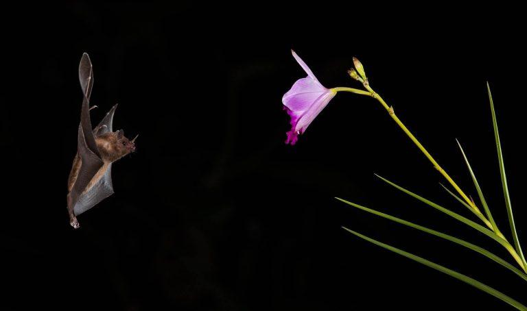 Do Bats Eat Bees?