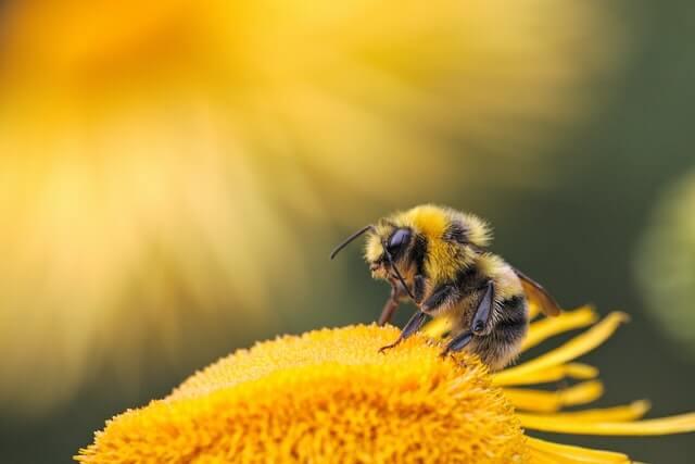 do bats eat honey bees