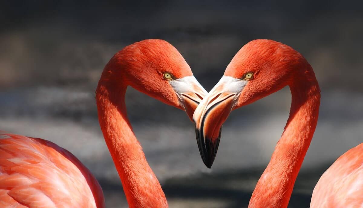 can you eat a flamingo