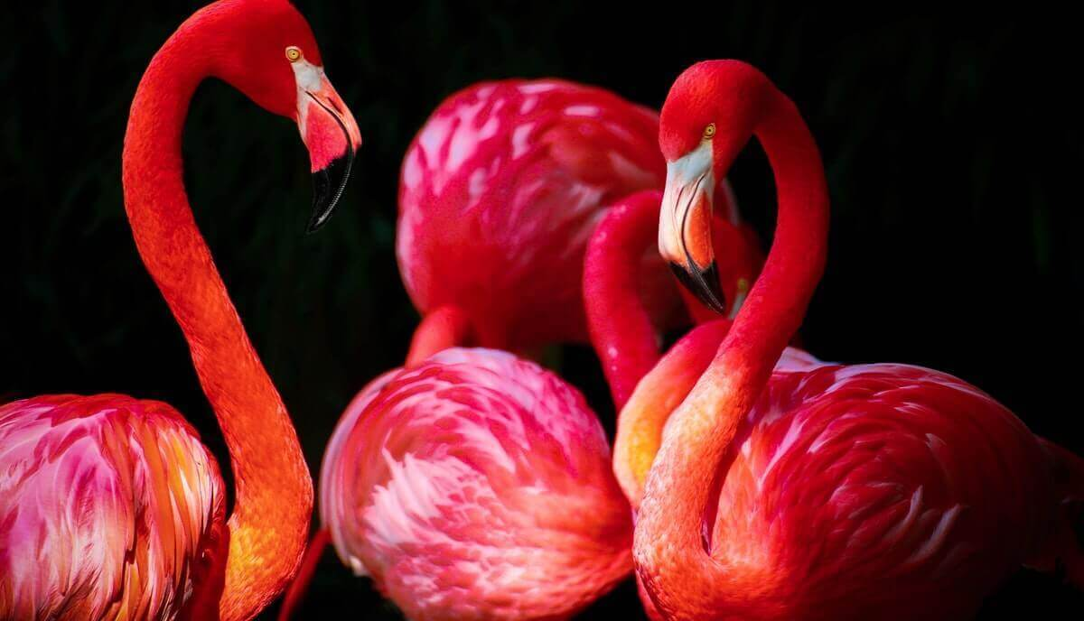 are flamingos smart