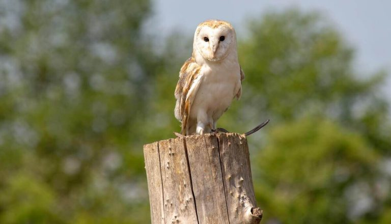 Are Owls Friendly? [Not Quite! Here's Why]