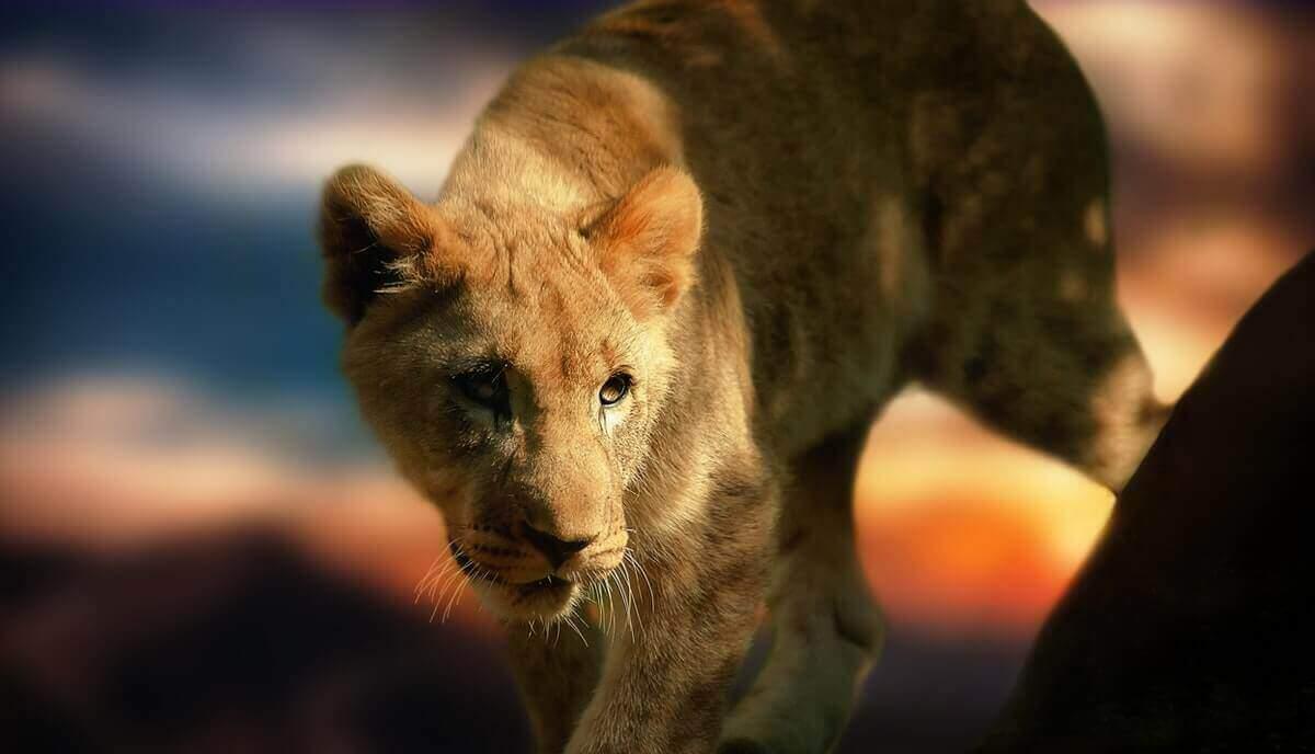 do lions eat fish