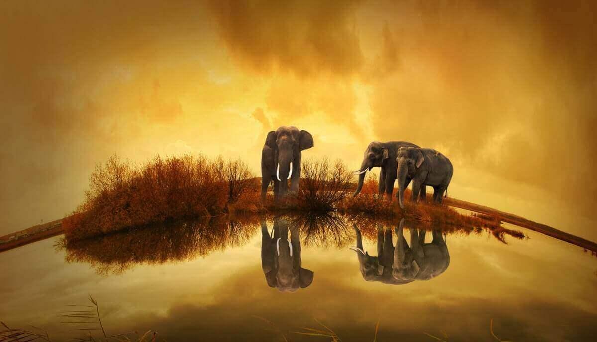 can elephants swim