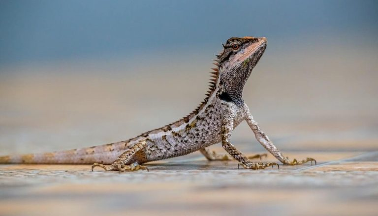 13 Awesome Animals That Crawl (Crawl Speed & Pictures)