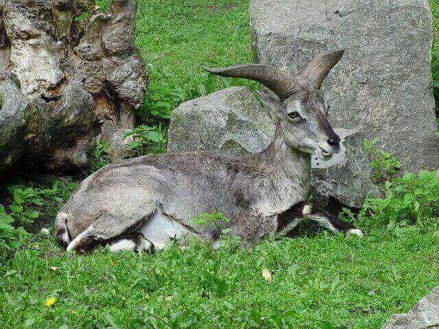 animals that hop
