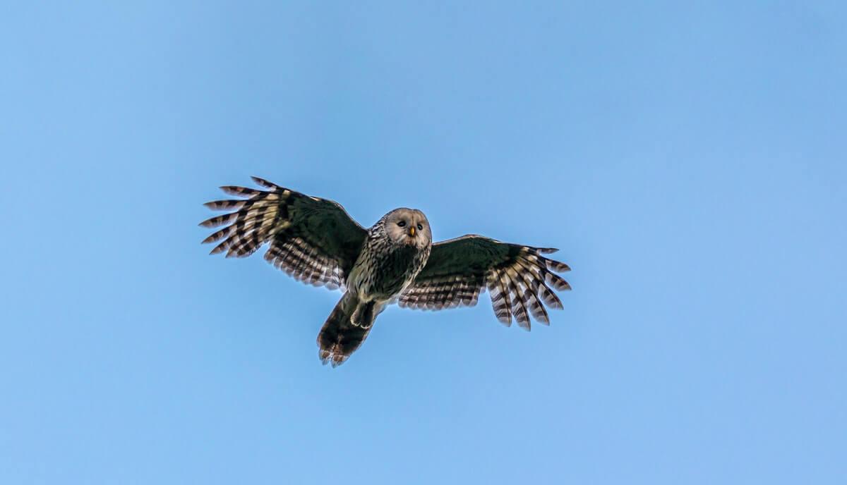 are owls mammals or birds