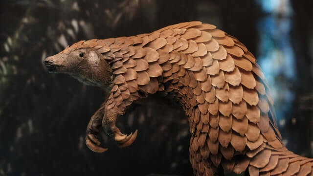 pangolin on two legs