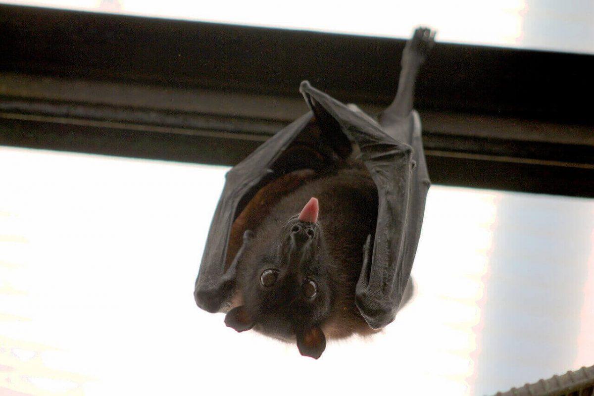 do bats have hollow bones