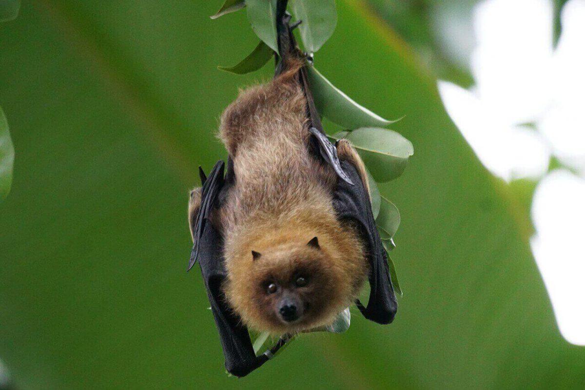 Are bats carnivores herbivores or omnivores