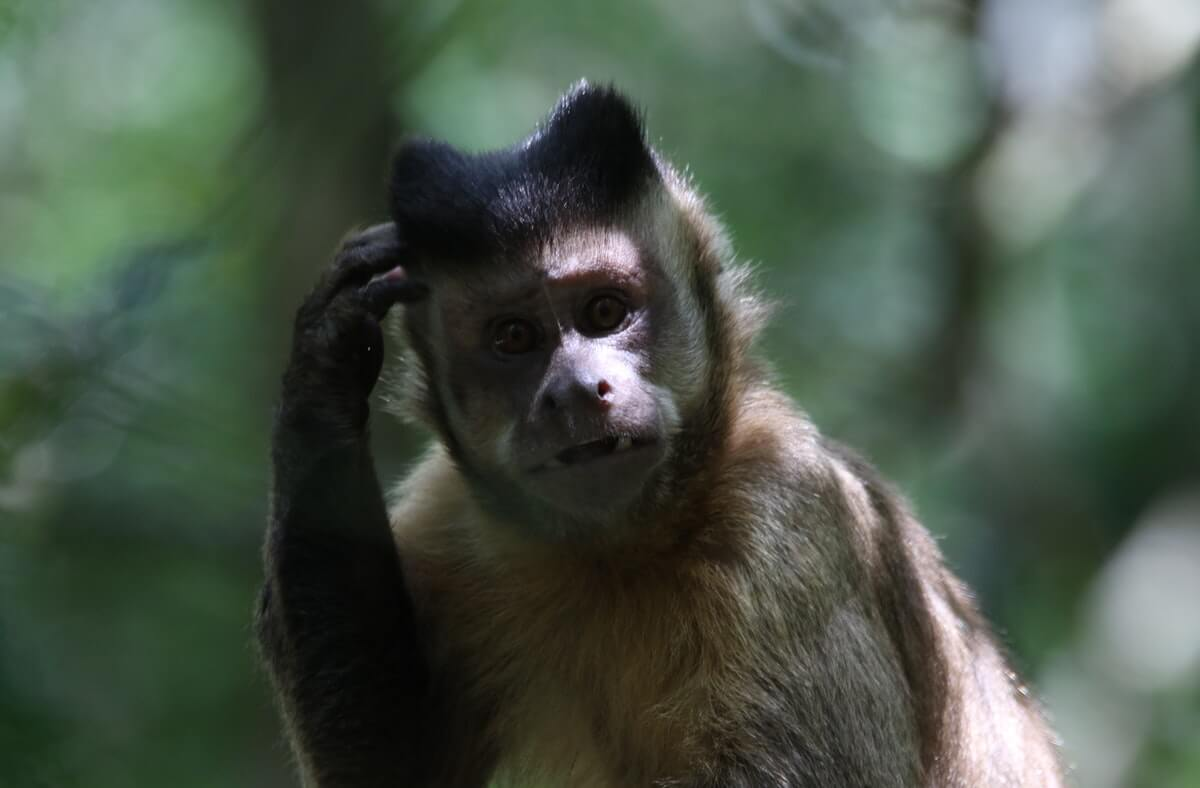 animals with bad memory