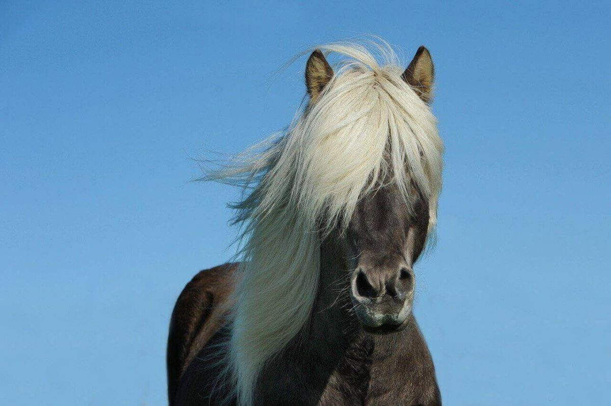animals with manes