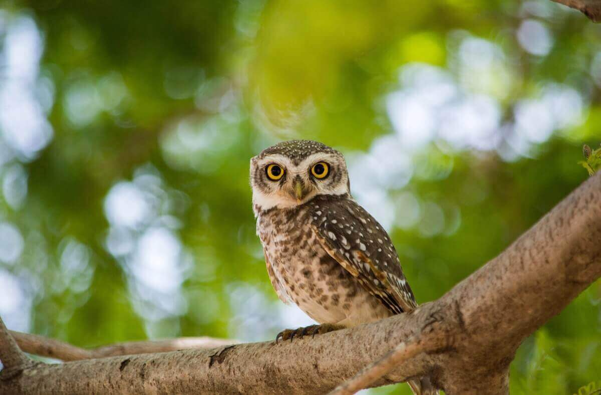 are owls smart or dumb