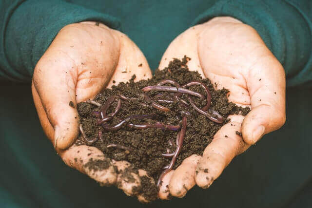 a man holding worms in his hand