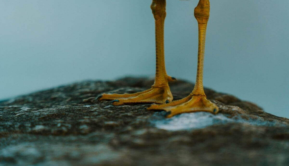 animals with webbed feet