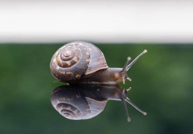 brown snail on a green grass