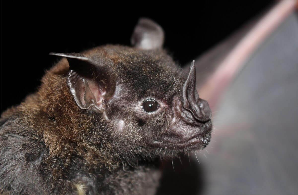 do bats eat spiders
