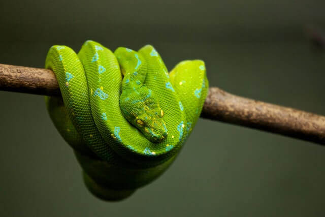 green snake on a tree branch