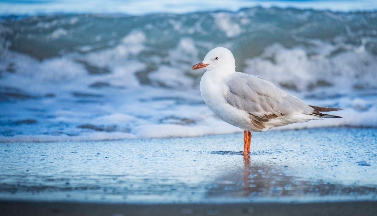 where do seagulls sleep