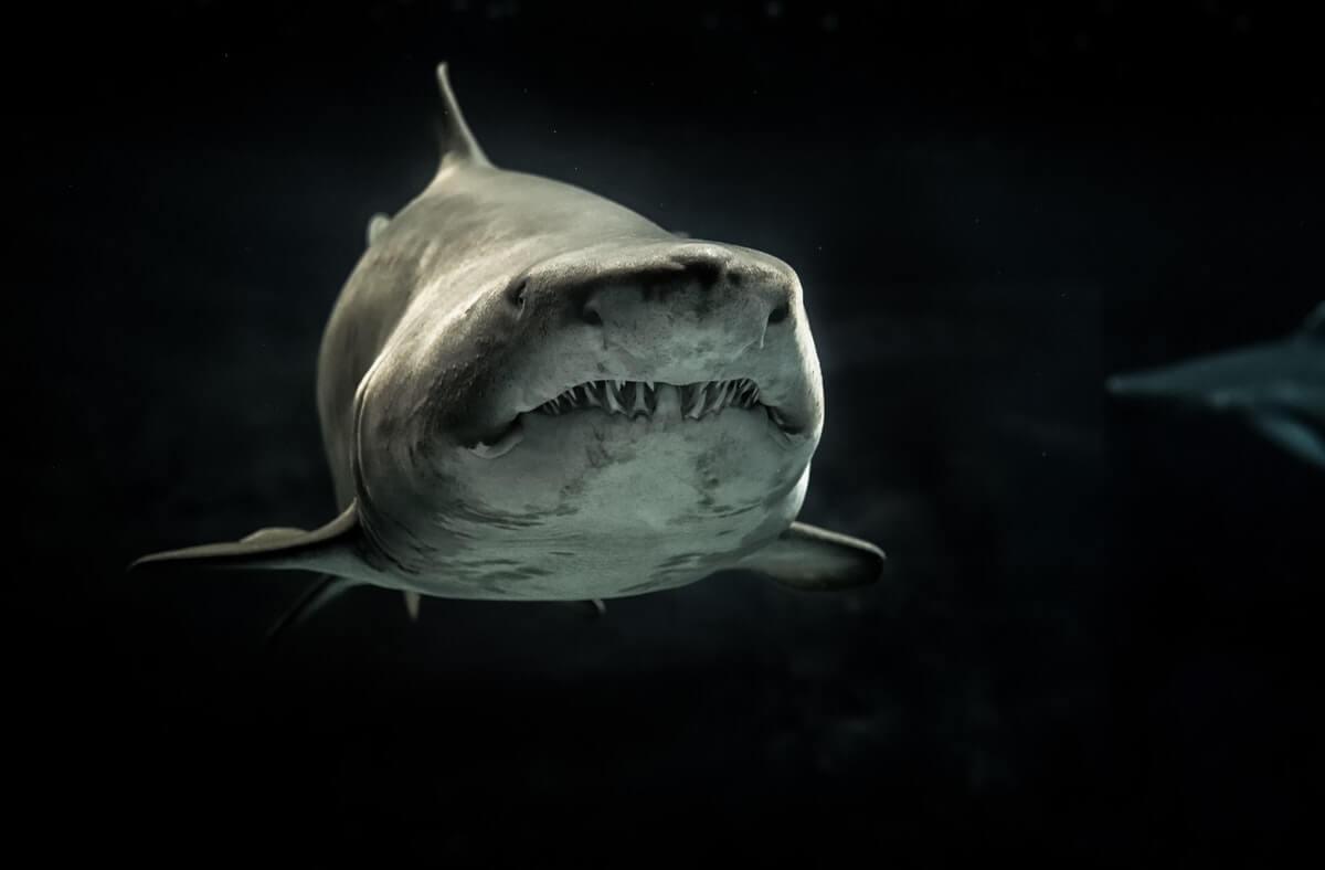 sharks animals that are quiet assassins