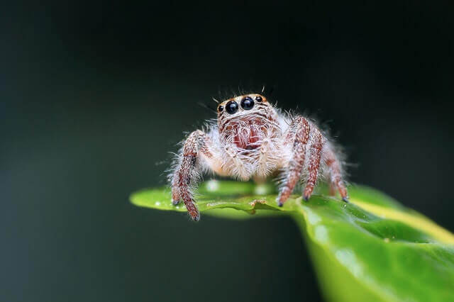 spider standing on a green leaf