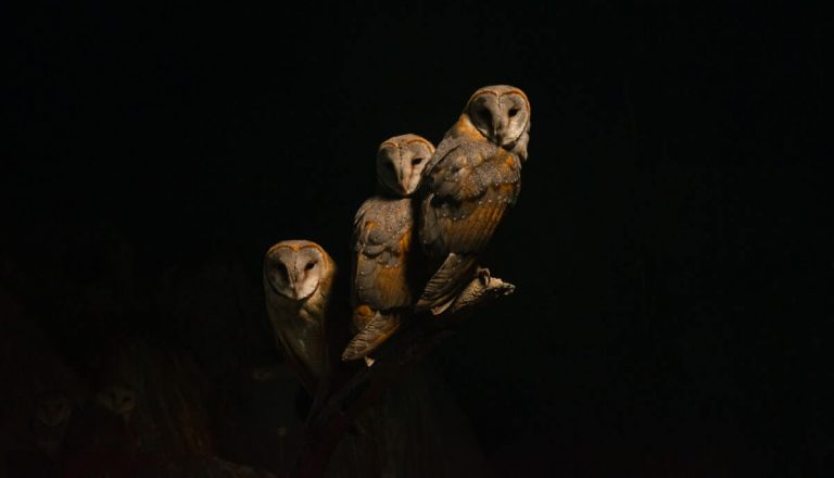 Are Owls Dangerous? Yes! Here's Why