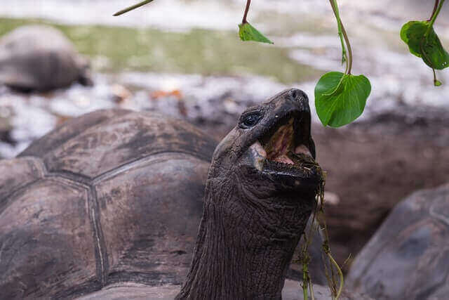 toothless turtle picking a green leaf
