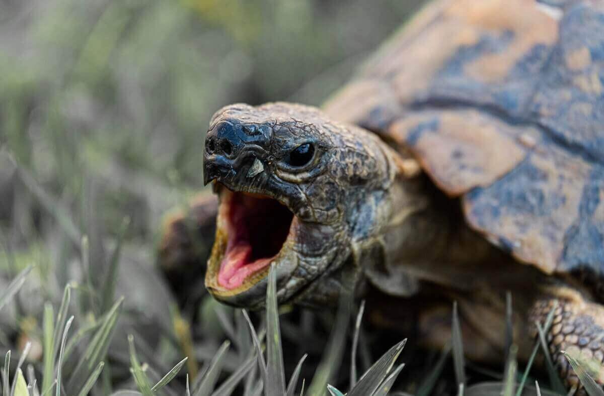 turtle, animal without teeth