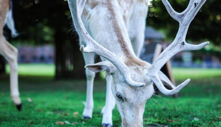 Can Herbivores Eat Meat? No, Here's Why