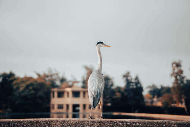 white heron standing on the concrete