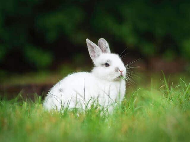 white rabbit on a green grass