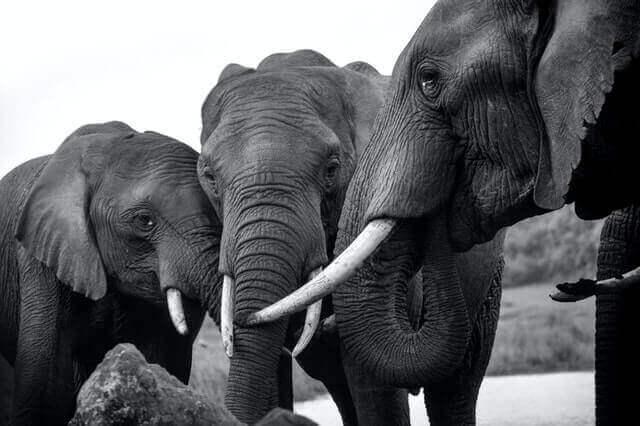 a group of three elephants