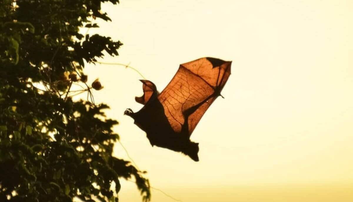 are bats birds