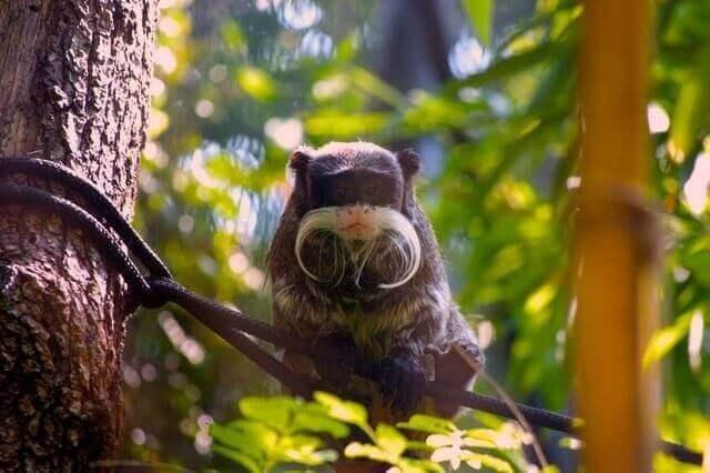 tamarin sitting on a tree branch